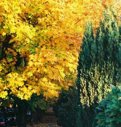 Autumn 857