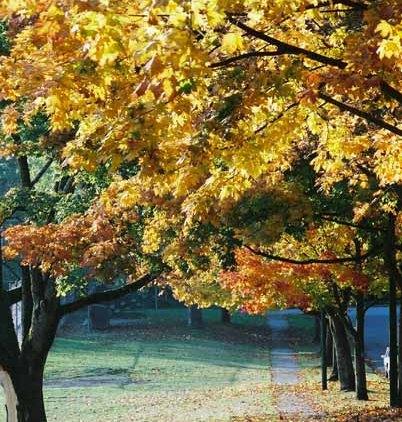 Autumn 859