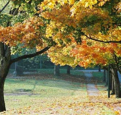 Autumn 860