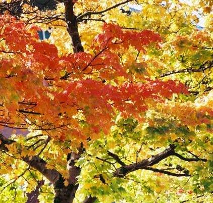 Autumn 861