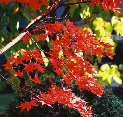 Autumn 862