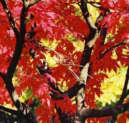 Autumn 864