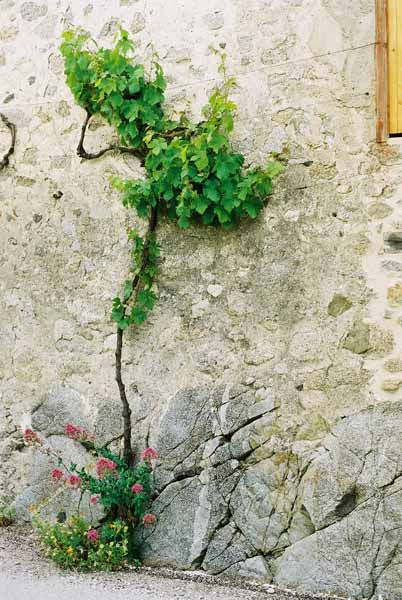 Pyrenees 1041
