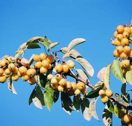 Fruit 1072