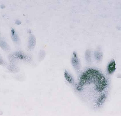 Raccoon Paw Prints 1084