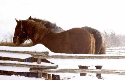 Horses 1098
