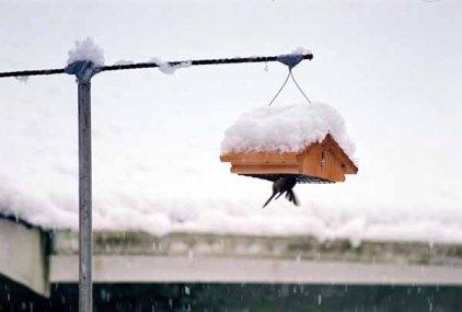 Bird Feeding 1099