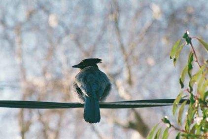 Bird on a Wire1101