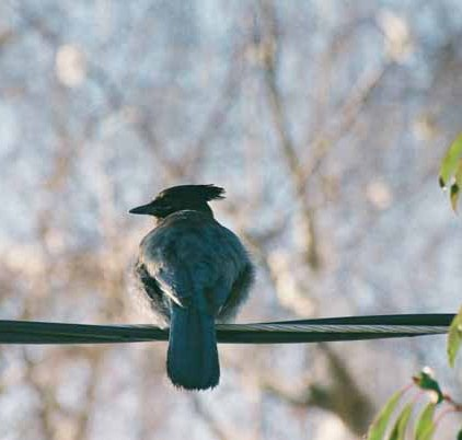 Bird on a Wire1101