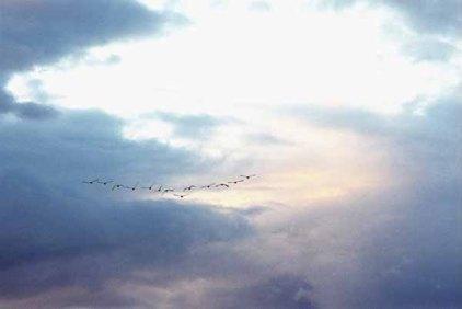 Birds at Sunset 1104
