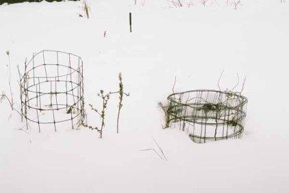 Mum's Tomato Cages 1129