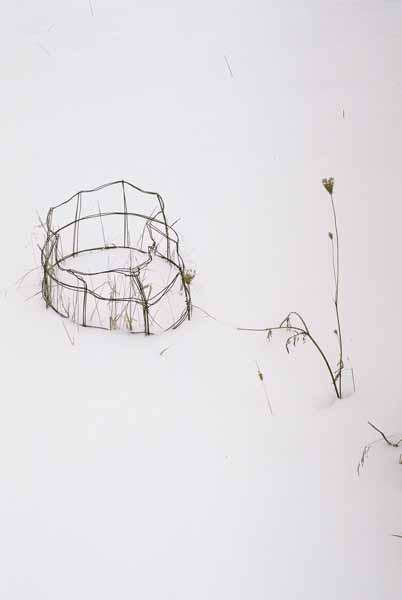 Mum's Tomato Cages 1130