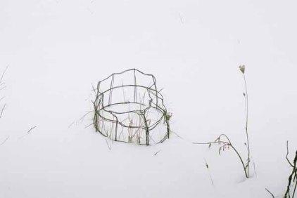 Mum's Tomato Cages 1131