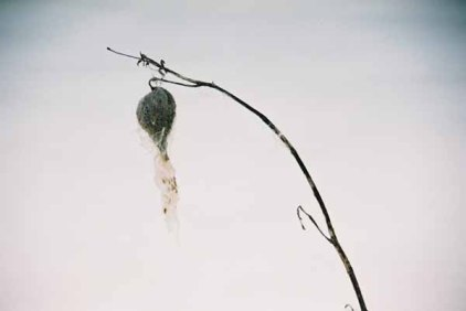 Seed Pod 1133