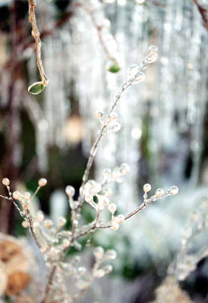 Winter Jewels 1138