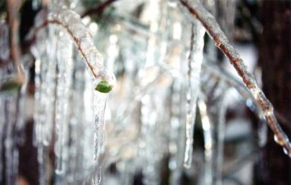 Winter Jewels 1139