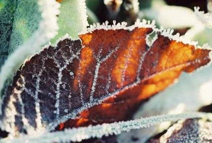 Winter Jewels 1144