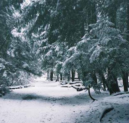 Pacific Spirit Park 1158