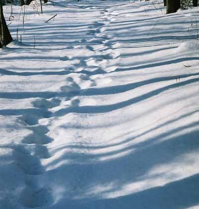 Footsteps in Snow 1165
