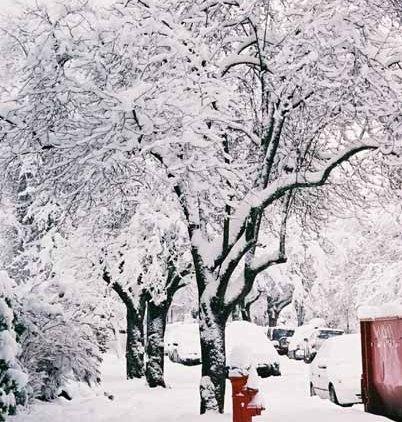 Snowy Trees 1174