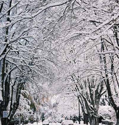 Snowy Trees 1175