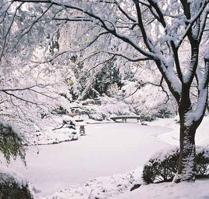 Nitobe Garden 1281