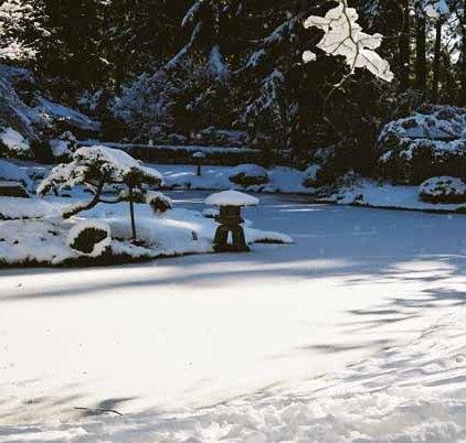 Nitobe Garden 1282