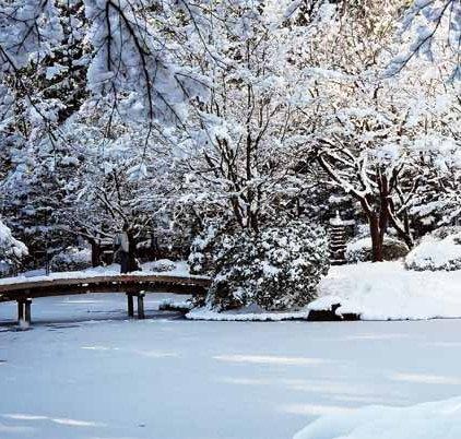 Nitobe Garden 1283