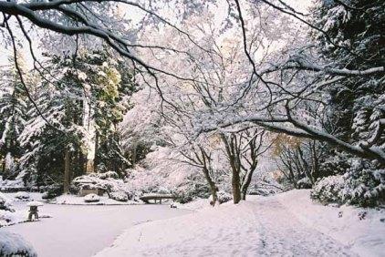 Nitobe Garden 1284