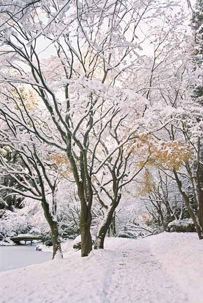Nitobe Garden 1285