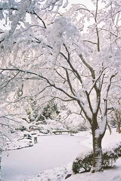 Nitobe Garden 1286