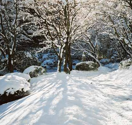 Nitobe Garden 1287