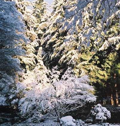Nitobe Garden 1288