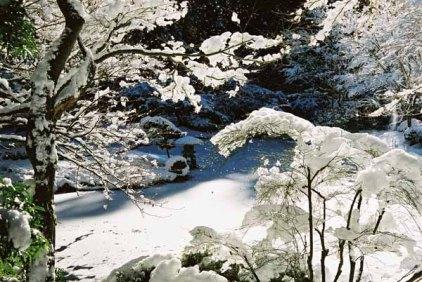 Nitobe Garden 1290