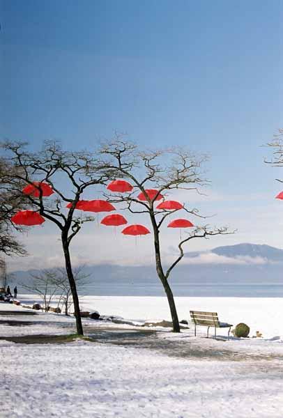 Rain Blossom Project 1364