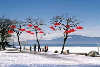 Rain Blossom Project 1365