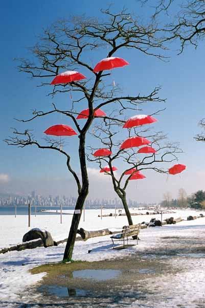 Rain Blossom Project 1372