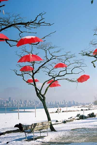 Rain Blossom Project 1373