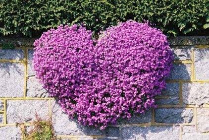 Purple flowers 1534
