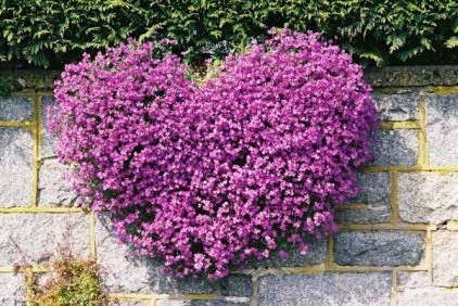 Purple Flowers 1536